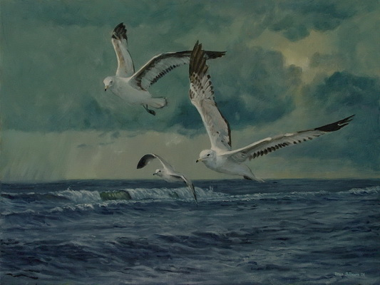 Gulls, Storm Front on the Mid Atlantic